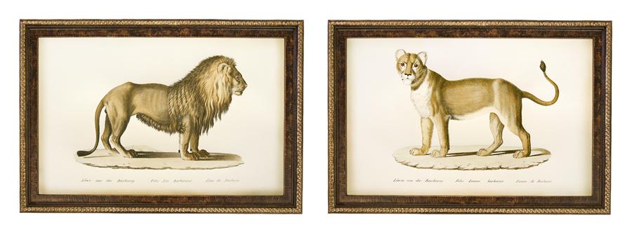 Brodtmann Lions